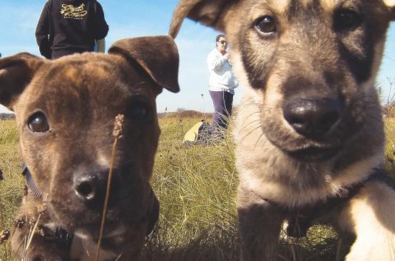 North Reno: Doggy Daycare